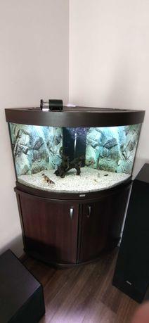 Akwarium JUWEL Trigon 190L + szafka Wenge
