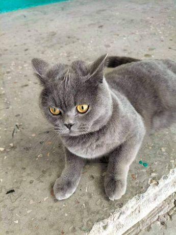 Найден (замечен) кот! Район Словянка!