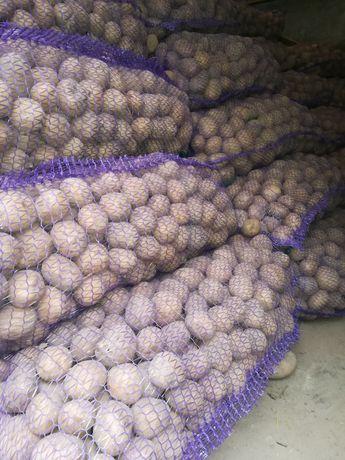 Посадочный картофель Гренада, Альвара