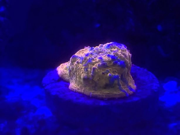 Corais Agua Salgada