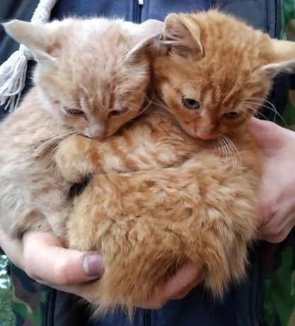 Віддам котят у добрі руки
