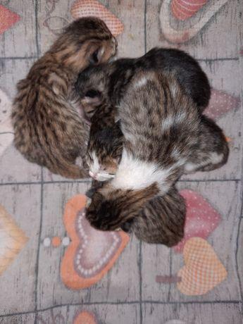 ZAREZERWOWANE Oddam kotka/ kocice