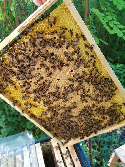Odkłady pszczele 5 i 4 ramkowe Żory - image 1