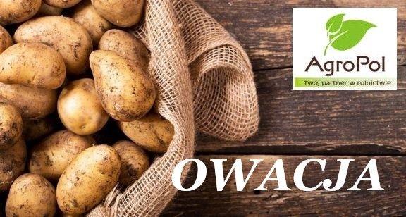 Ziemniak Sadzeniak OWACJA Sadzeniaki Ziemniaka Sadzonki