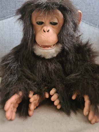 Małpa Interaktywna