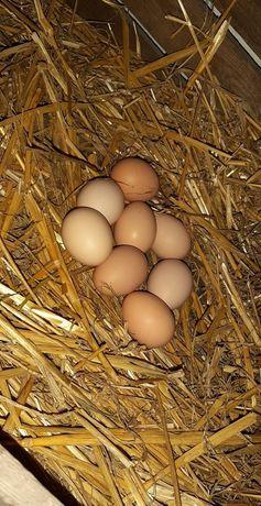 Jaja wiejskie wolny wybieg swojskie ekologiczne