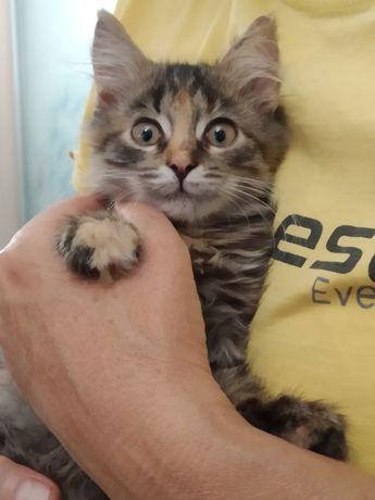 Кошечка Маруся в заботливые руки