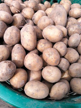 Ziemniaki do sprzedania