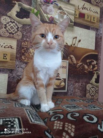 Чудесный котик-скромник ищет семью