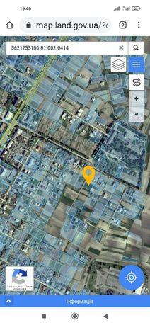 Продам земельну ділянку в Гощі