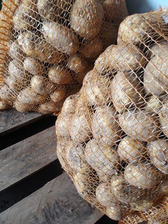 Ziemniaki  prosto z pola zapraszam do współpracy.