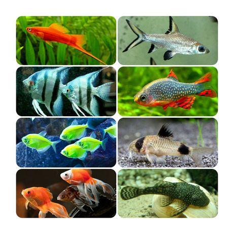 Аквариумные рыбки около 400 видов, мирные рыбки,  хищные рыбки