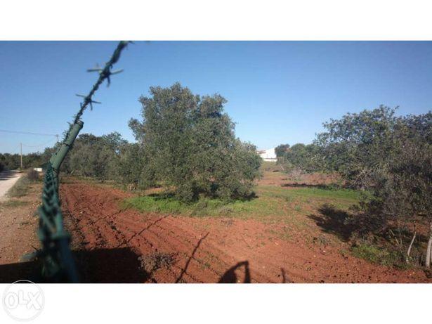 Quinta de 14,5Ha em Silves, Algarve para venda