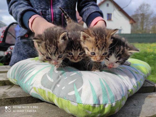 Oddam za darmo kotów