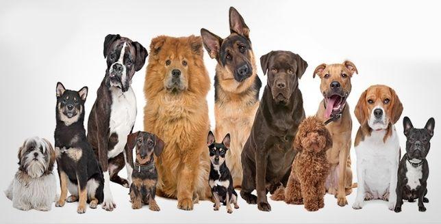Вигул собак , вилики и маленьки (не агрисивни)