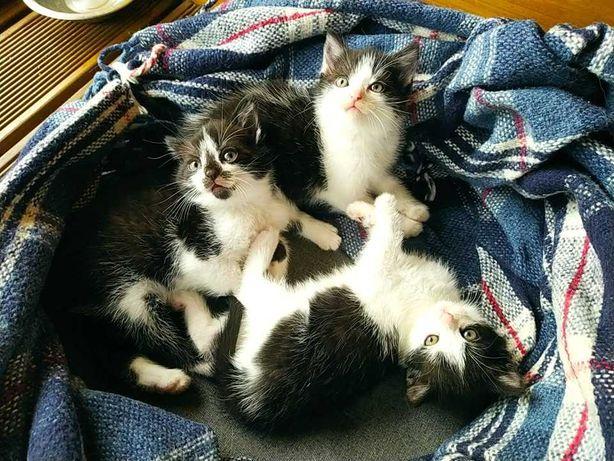 3 małe kotki - urodzone w połowie sierpnia