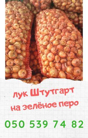Лук цибуля Штутгарт на перо урожай 2020 г Одесская обл