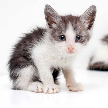 Котенок Дашуля, 3 месяца, ищет Дом и Семью (в добрые руки)