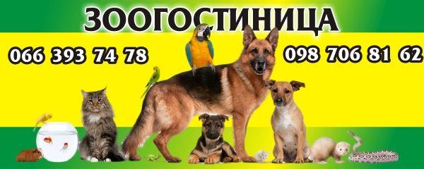 зоогостиница для животных,передержка,выгул собак