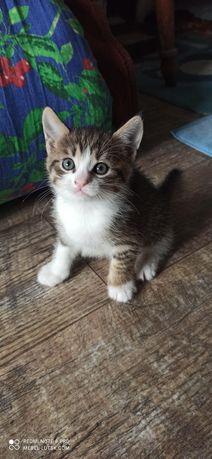 Котик, кошеня, кіт (віддам даром) добре і Привчене до туалету
