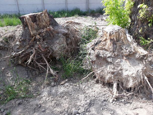 Drzewo pień korzeń