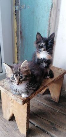 Подарю  хорошеньких котят