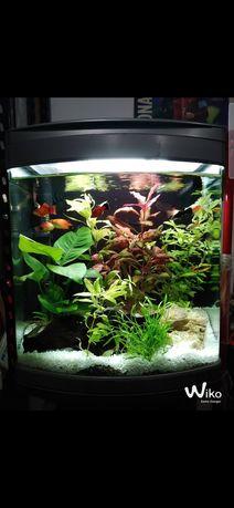 Duplo tubo neon para aquário