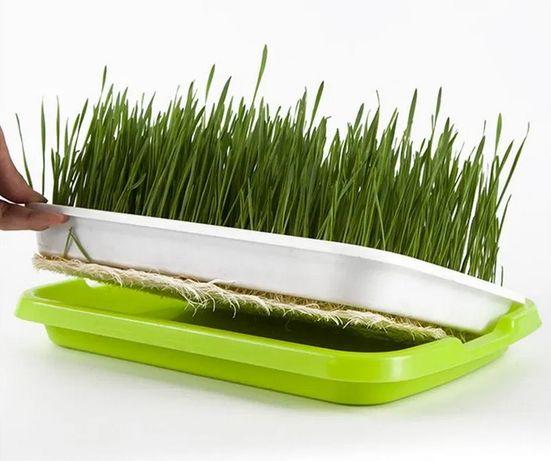 Лоток для гидропонного выращивания рассады и микрозелени