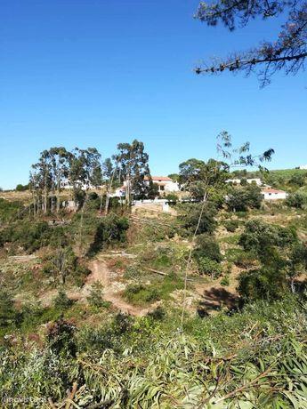 Terreno Rústico - Ribafria e Pereiro Palhacana