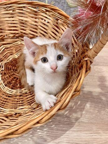 Отдам счастливого котенка