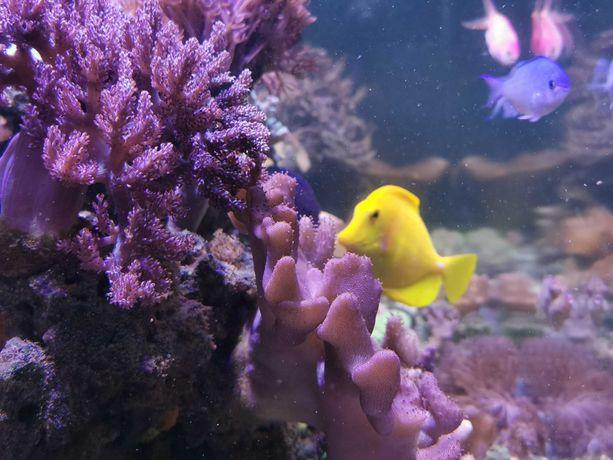 Akwarium morskie