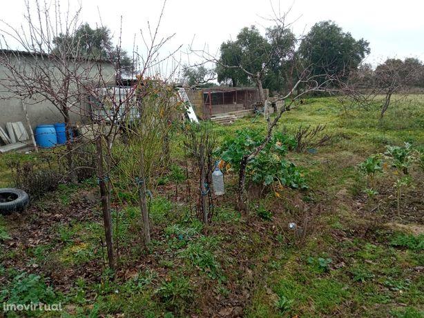 Terreno Rústico  Venda em Pedrógão de São Pedro e Bemposta,Penamacor