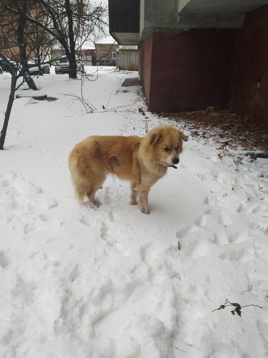 Найдена собака на Богомольца Харьков - изображение 1