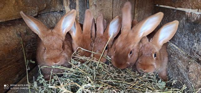 Продам кролики різного віку