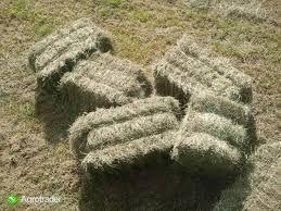 SUCHE siano kostka 2020 LIPIEC dla koni królików bydła