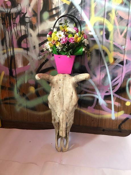 Череп коровы с рогами