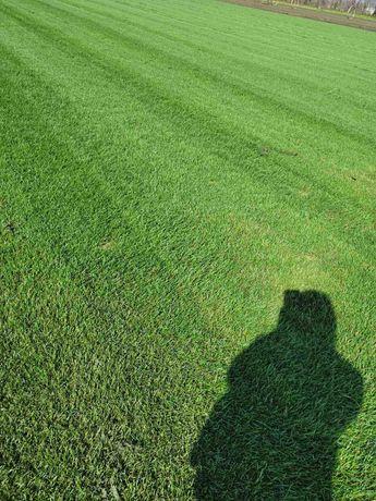 Аэрация, скарификация газона, покос и удобрение!
