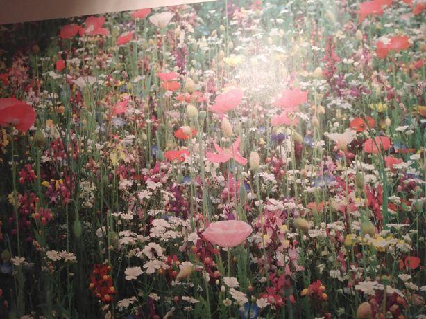 Obraz polne kwiaty Ikea