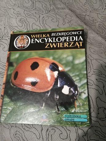 Encyklopedia zwierząt bezkręgowce