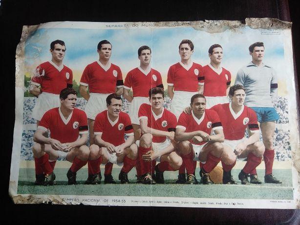 Poster Benfica 1954/1955 - Campeão Nacional