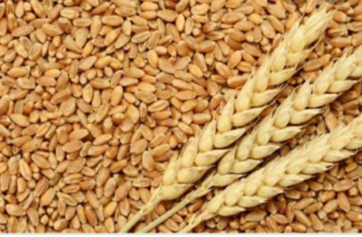 Продам пшениця ячминь