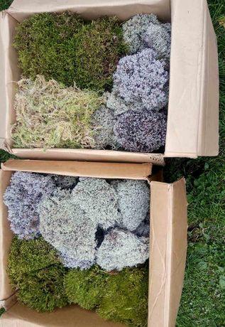 Набори моху для уліток сфагнум, ягель та