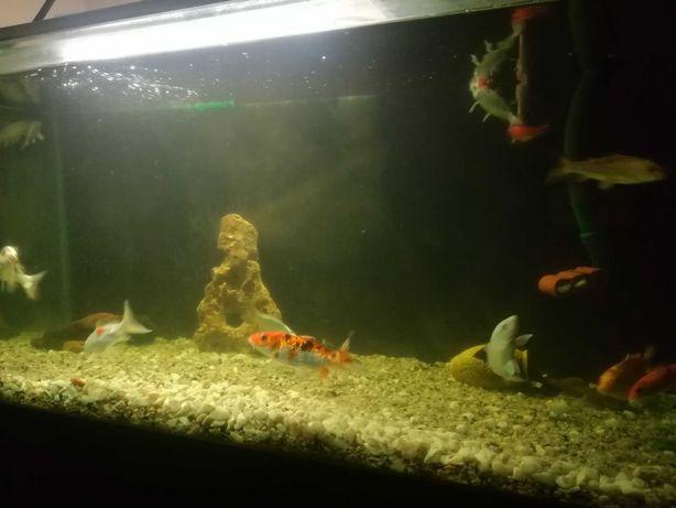 Vendo aquário  e peixes de água fria