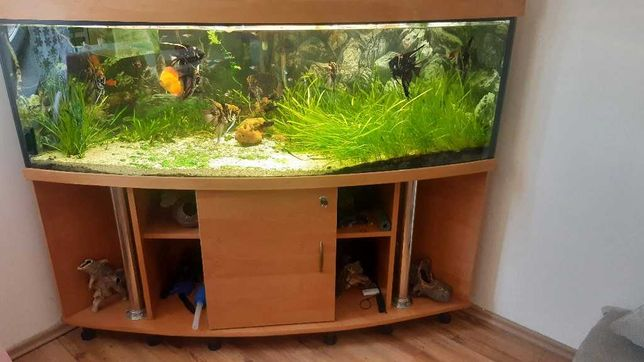akwarium rogowe panoramiczne,Pilnie
