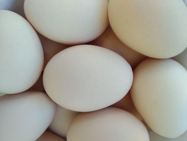 Jaja wiejskie XXXL EKO
