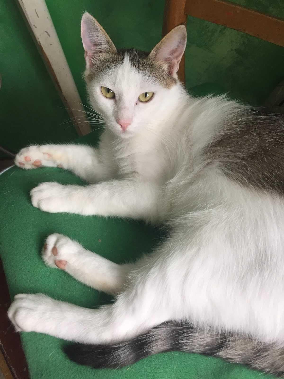 Кот котик Русик очень нужен дом