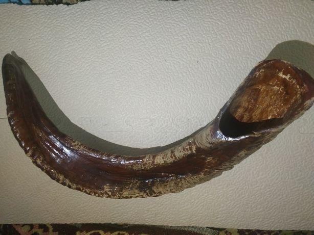 Рог Горного Барана