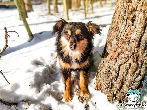Mały, młody, nieśmiały pies Mentosik do adopcji!