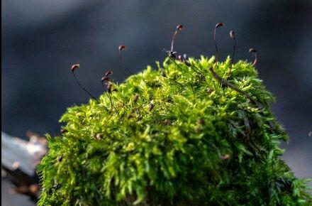 Кора и мох, для орхидей, комнатных цветов и улиток