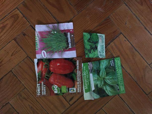 Sementes tomate, cebolinho, manjericão, salsa
